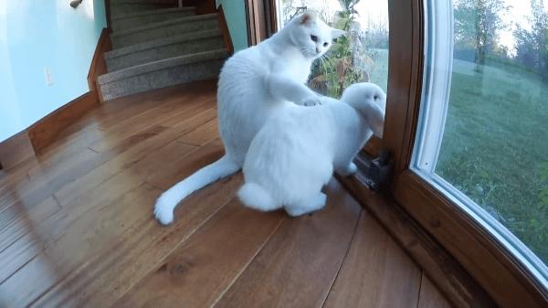 ありえない!!!うさぎと猫が同居!?そんなに近くにいて大丈夫なの?
