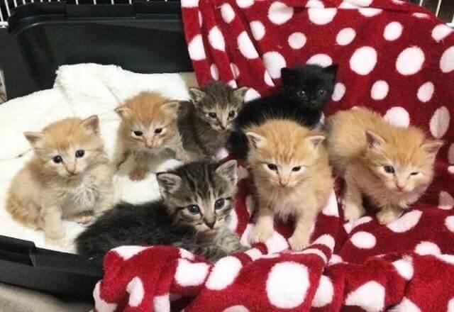 母猫の亡骸のそばで悲しそうに鳴いていた7匹の子猫。優しい女性との運命の出会いが幸せへと導いた…