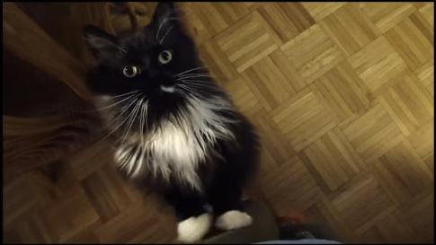 猫って芸できるの!?お座り、お手やハイタッチ!なんでも出来すぎじゃない!?