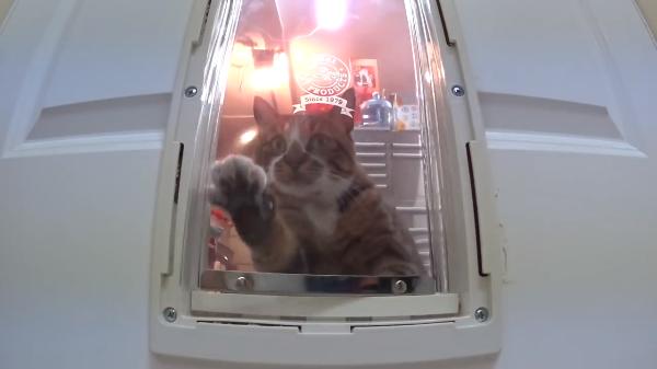 「ニャンだこれ?」ある日突然現れたペット用ドアに興味深々の猫さんたち♡