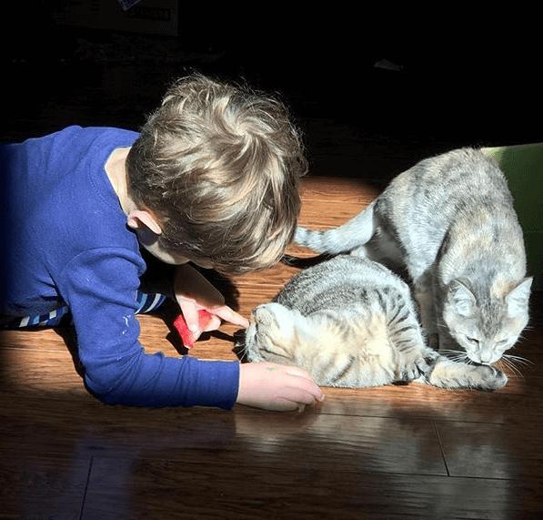 私が保護猫の養育ボランティアを始めたら2歳の息子が言ったのです。『み~んなおうちでぼくがお世話をしてあげたい!』