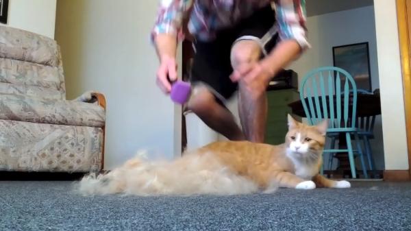 こんなにどこから!?猫をブラッシングしてみたら大量の毛が取れまくった!!!