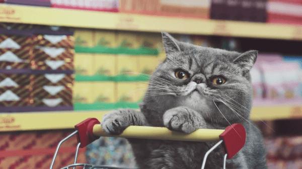 猫がお買い物!?本当にあったらいってみたい♪猫界のスーパー♡