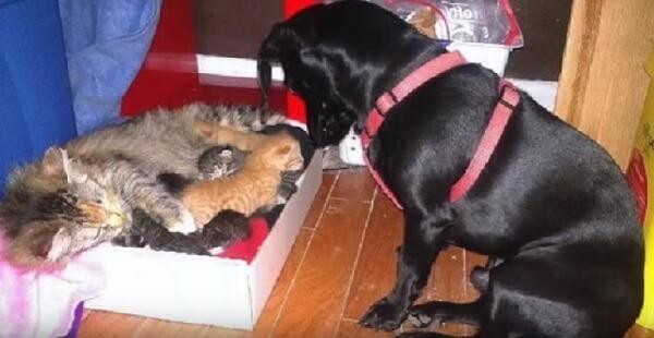 保護されてから7匹の子猫を産んだ母猫。生まれた子猫に一目ぼれした先住犬「ボクがお父さんになるよ」と子育てに大奮闘!