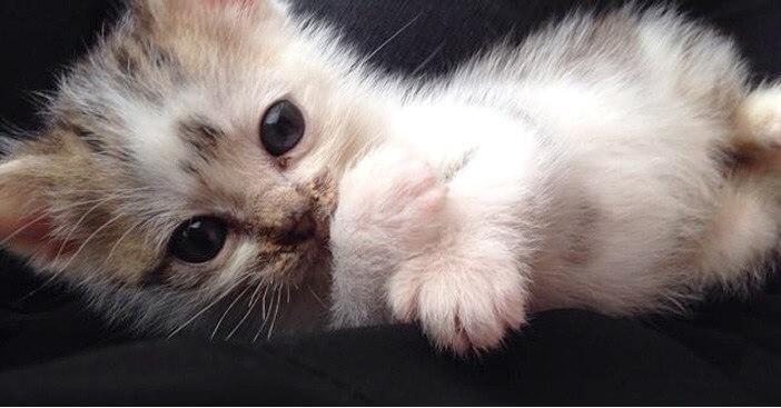 車に轢かれ横たわる母猫のそばを離れずに鳴いていた子猫。その悲しげな声が心優しい夫婦に届いた…