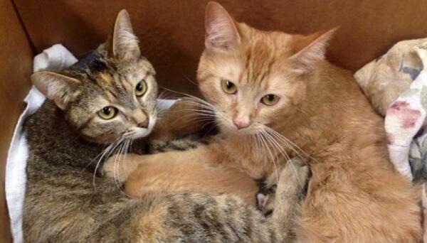 ガレージで保護された2匹の仲良しな野良猫。驚いたことに2匹とも妊娠していた!出産後の母猫たちの子育てアイデアに納得♡