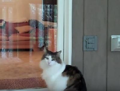 「ただいまだにゃ~」帰ると入口のチャイムを鳴らして扉を開けてもらう猫さんがスゴすぎる!