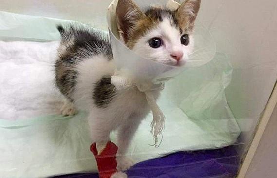 ゴミ捨て場で発見されたケガを負った子猫。心優しい女性が保護すると…非常に珍しい猫だった!