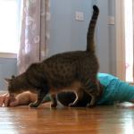 やっぱりそうなった(笑)飼い主さんが倒れたら猫はどうする?