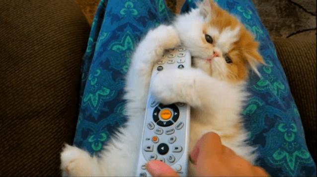 何が良いの!?(笑)飼い主さんの持ち物にとにかく抱きつきまくる子猫!!!