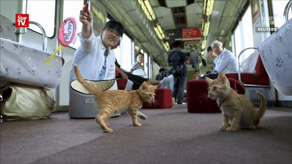日本初!走行中の電車内に何故か猫がいっぱい♡猫カフェ列車とは!?