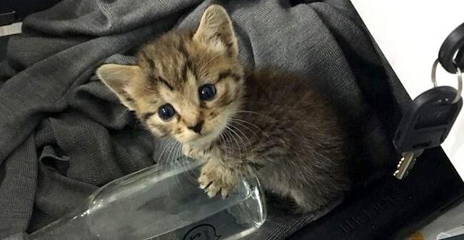 箱に入れて捨てられていたひとりぼっちの子猫。オフィスに連れていくと瞬く間に20人のお友達が出来ちゃった♡