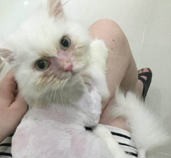殺処分施設へ持ち込まれた衰弱した猫。「もう助からない」といわれた猫に1人の女性との出会いが奇跡を起こす…