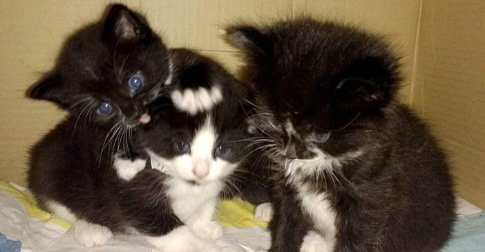 驚愕!バスの中に捨てられた3匹の子猫たち。保護されて施設へ連れていくととてもホッとしたように落ち着き…