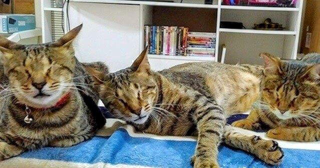 衝撃!病気で盲目になり捨てられた3匹の猫たち。絶望的な環境の中、お互いの存在が唯一の光だった…