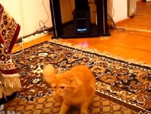 プオ~ン!マリオの音に合わせてジャンプする猫さん。ゲームさながら冒険するかのような神妙な顔つきに吹いたっww