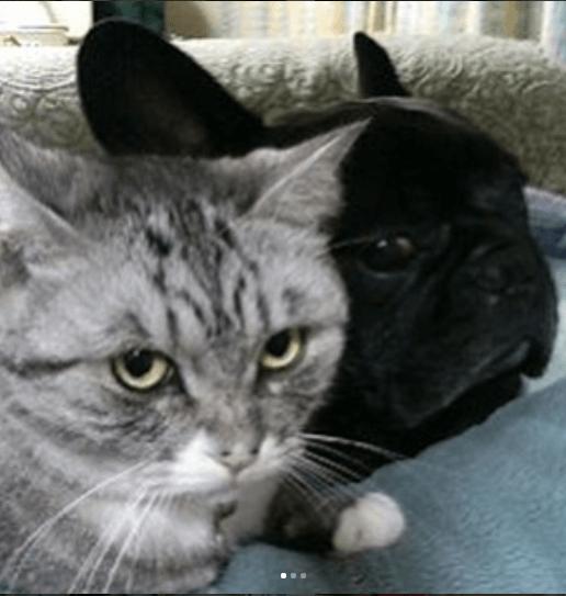 病気の発覚から1か月足らずで旅立った15歳の猫と愛猫を失った家族に再び笑顔を取り戻させた子猫