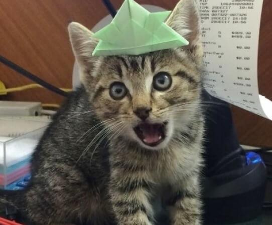 保護されたけど…いつもキーキーと鳴きながら威嚇するとても警戒心の強い子猫。生まれて初めて知った愛にその態度が一変した!