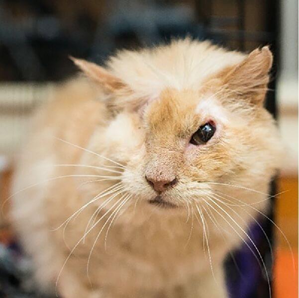 何者かに酸を顔に浴びせられ、右目を失ってしまった猫「トーマス」獣医から安楽死を勧められたにもかかわらず彼は人間を信じた…