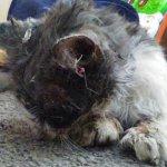 行方不明になった猫が数日後、凄まじい虐待を受けて無残な姿で家族の元へ帰ってきた。懸命な治療の結果…
