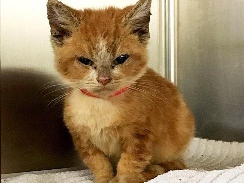 子猫なのにいつもイカツイ怒った顔でいる子猫。その怖い顔にはとても辛い理由があった…