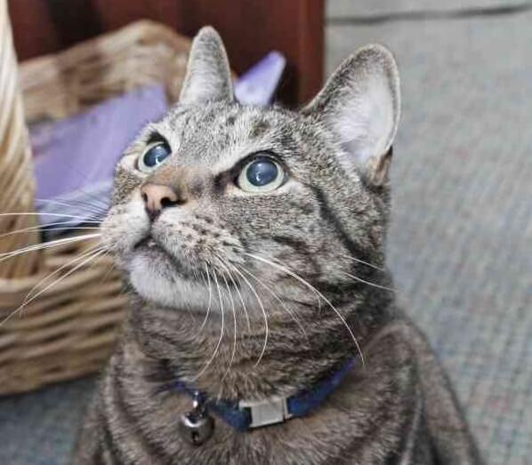 突然、老人ホームに現れた猫。みんなの優しさに触れて傷ついた心が癒されたのか毎日通うようになった…