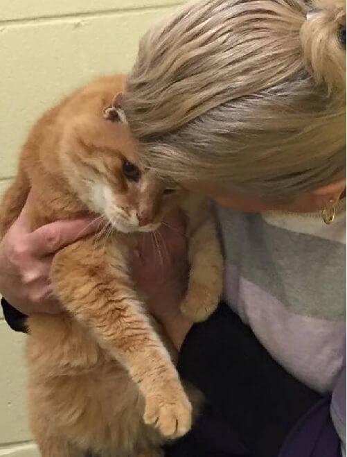 保護シェルターから引き取られた1匹の猫。親友と離れて元気のない猫にとった飼い主の女性の行動とは…