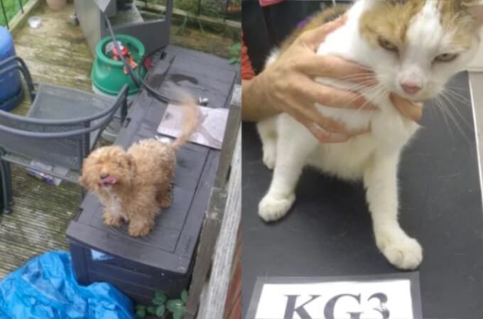 残酷!飼っていた犬1匹と猫2匹を放置したまま2週間の家族旅行に行った夫婦。その結果、悲惨なことに…