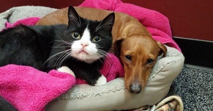 路上で一緒に捨てられ生活していた犬と猫。悲しいことに猫の四肢は麻痺して動けないため親友の犬がずっと守っていた…