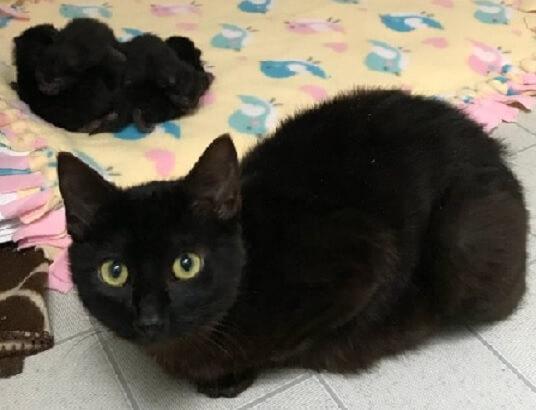 森の中でいきなりすり寄ってきたフレンドリーな黒猫。日に日に大きくなるお腹を抱え出産できる安全な場所を探していた…