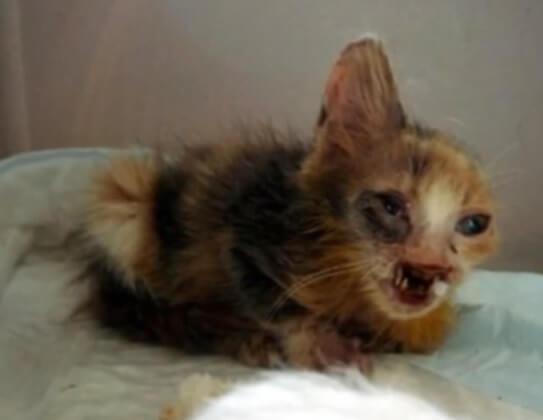 7歳の少女によって路地のゴミ山の中から救出された口の一部と片耳のない瀕死の子猫。心優しい人たちのおかげで奇跡の生還を遂げる…