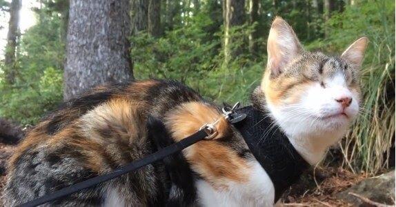 ほっこり♡生まれつき盲目の猫が自然の中で大好きな山歩きをする姿に心温まる…