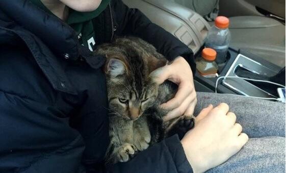 衝撃!高速道路でゴミのように投げ捨てられた猫を見た少年がレスキュー。幸運の女神は猫を見離さなかった…