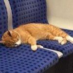 なぜか地下鉄の電車の中で爆睡していた茶白猫。心優しい男性のおかげで無事に飼い主さんの元へ…