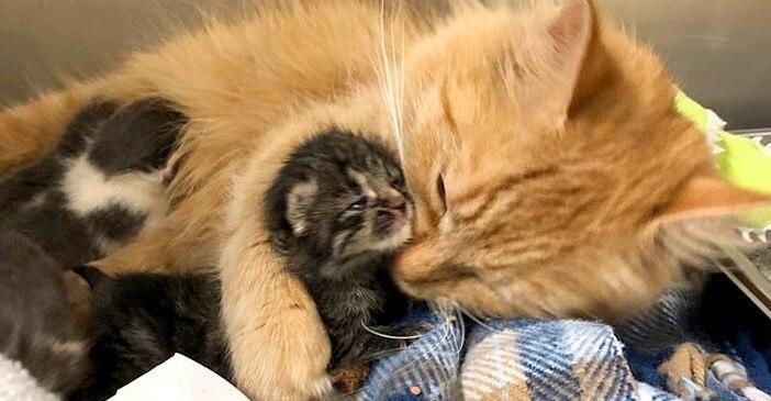 病気で入院した母猫の代わりに子猫たちの世話を始めた保護猫。出会ってすぐにたくさんの愛情を注ぐ姿に感動…
