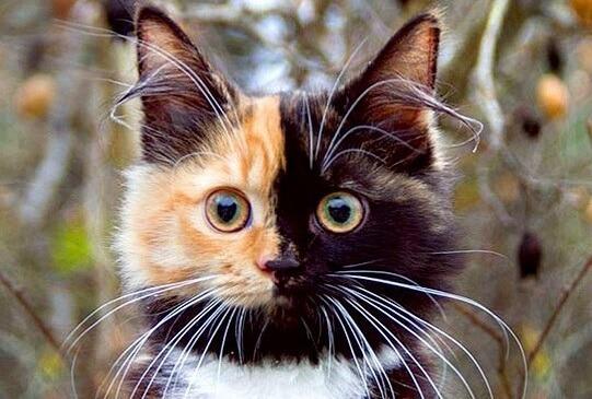 左右が別々の不思議な柄をもつキメラ猫。その美しさに一瞬でひと目ぼれした女性と出会い、インスタで超人気者に!