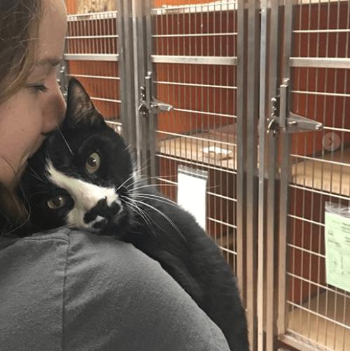 シェルターへ連れてこられたとき誰にも触れさせなかった猫は病気を治してもらったら会う人全員とハグする猫だった