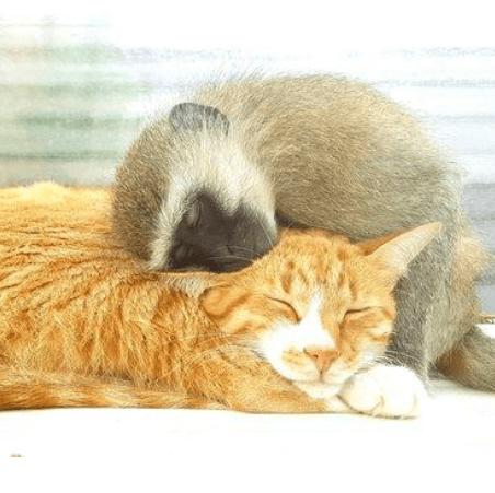 生後間もなく事故で母親を亡くし、保護施設で育てられるベルベットモンキーと施設の仲間たちを繋いだ猫達
