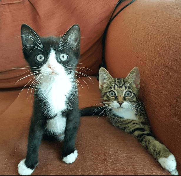 後ろ足がない状態で生まれた子猫の兄弟。困難を一緒に乗り越えるおしゃべりな兄と好奇心旺盛な弟