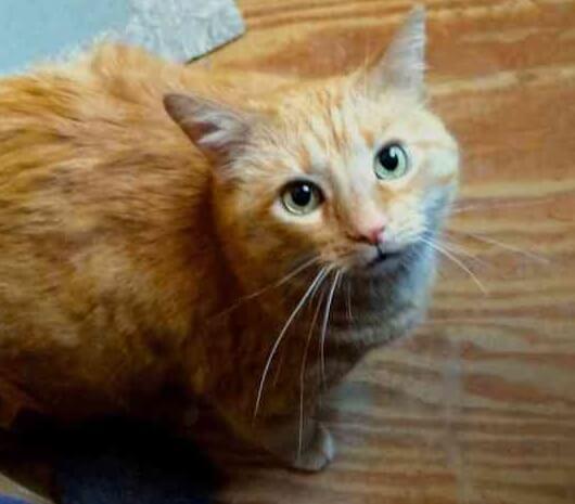 家の中で暮らしている猫をじっと羨ましそうに見ていた野良猫。気づいた飼い主さんが玄関のドアを開けると…