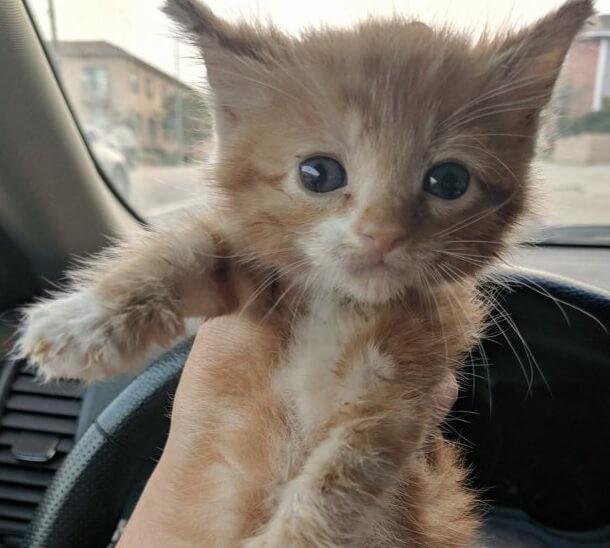 兄弟とともに棲み家を追われ木の上で発見された衰弱した子猫。優しい女性に保護された結果…