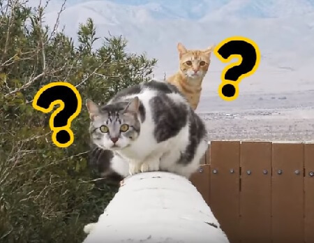 【飼い主さん必見!】愛猫の気持ちがもっとよくわかるようになる5つのヒントを知って絆を深めよう!!