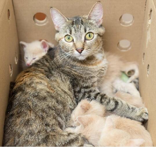 究極の母性愛!我が子も含め空腹だった14匹の子猫たちへの献身的な世話でやせ細った母猫に涙がとまらない…