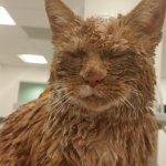残酷な虐待!いったい誰が?!全身をコンクリートで固められ発見された猫。絶対に助けるという人々の懸命な処置で一命をとりとめた…