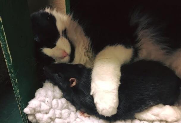 一緒に施設へ連れて来られた犬・猫・ネズミ。この不思議な組み合わせの絆の深さに周りはビックリ!