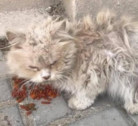 飼い主に捨てられ、周りの野良猫にいじめられ隠れて暮らしていた猫。辛い毎日を送りながらも人間の優しさに触れると嬉しくて寄り添うようになる…