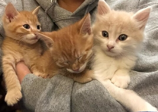 保護された3匹の子猫のうち2匹が障害をもつ兄弟猫。元気な子猫はずっと寄り添い、深い絆で結ばれた子猫たちに心温まる…
