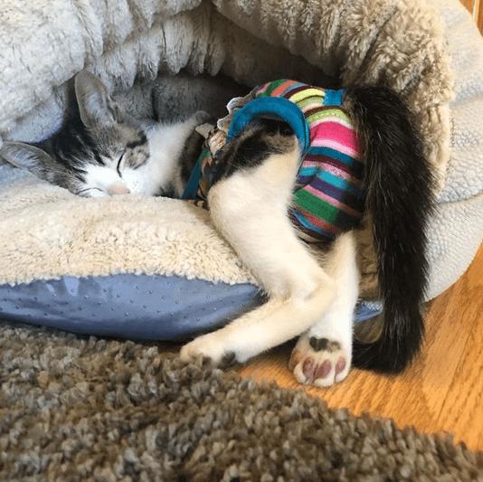 夫が仕事場で子猫を見つけてきた。機械の上から転落し母猫に見捨てられた生後間もない子猫
