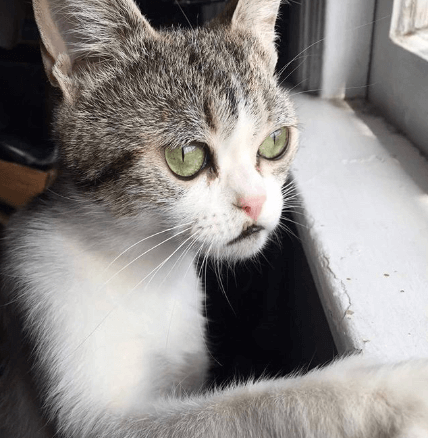 安楽死から救われ、生後間もない我が子を亡くし、生き残った子猫との辛い別れを乗り越えた感染症を抱える猫