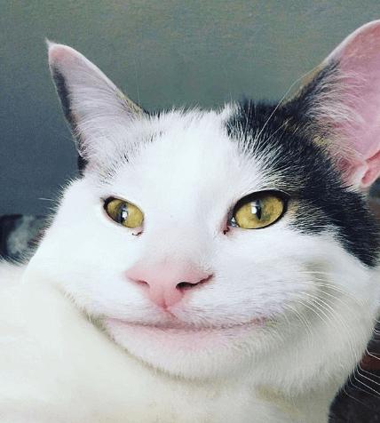 なぜかクセになる丁寧な笑顔。SNSで急激にファンを増やしている不思議な魅力を持った礼儀正しい猫。